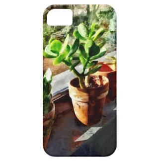 Jade-Pflanzen im Gewächshaus iPhone 5 Hülle