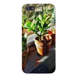 Jade-Pflanzen im Gewächshaus iPhone 5 Schutzhülle