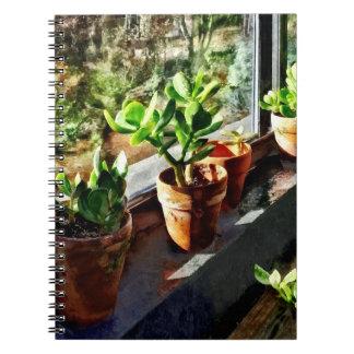 Jade-Pflanzen im Gewächshaus Spiral Notizblock