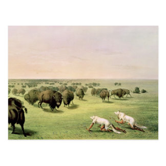 Jagd-Büffel getarnt Postkarte