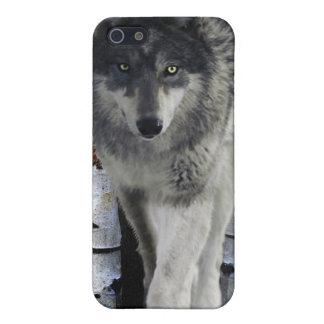 Jagd des grauen Wolfs in den Winter-wild lebenden  iPhone 5 Hüllen