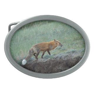 Jagd des roter Fox-Tier-Fotos Ovale Gürtelschnallen