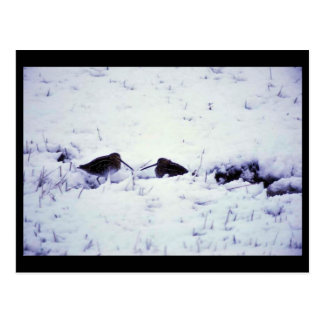Jagen Sie im Schnee Schnepfen Postkarte