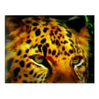 Jaguar-Augen Postkarte