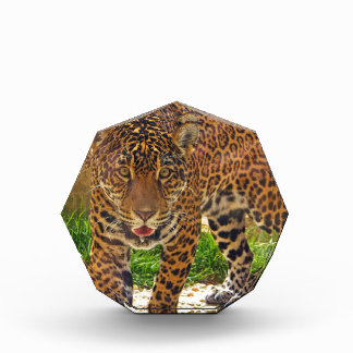 Jaguar Auszeichnung