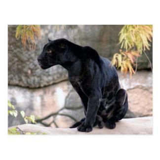 Jaguar black4x6 postkarte