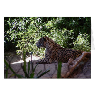Jaguar-Karte Karte