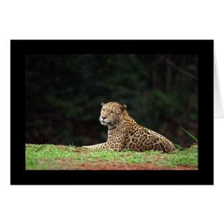 Jaguar Lounging Karte