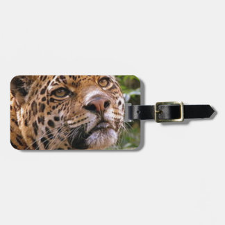 Jaguar neugierig kofferanhänger