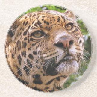 Jaguar neugierig sandstein untersetzer