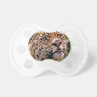 Jaguar neugierig schnuller