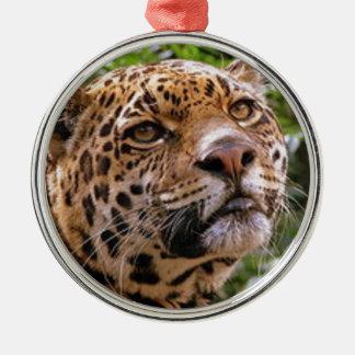 Jaguar neugierig silbernes ornament