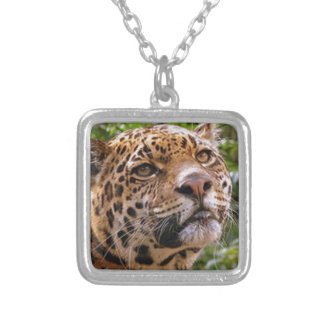 Jaguar neugierig versilberte kette