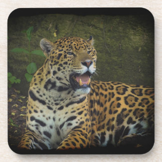 Jaguar-wilder Katze Tier-Liebhaber Getränkeuntersetzer