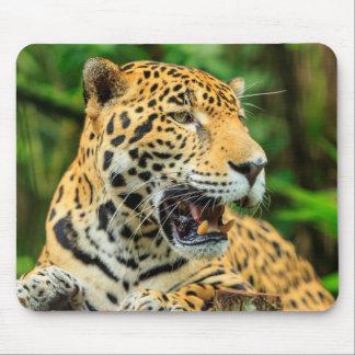 Jaguar zeigt seine Zähne, Belize Mousepad