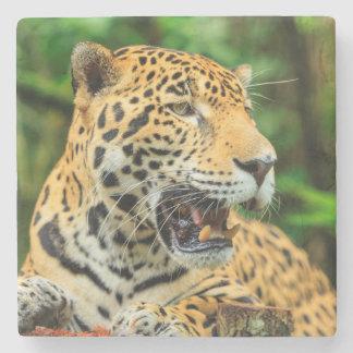 Jaguar zeigt seine Zähne, Belize Steinuntersetzer