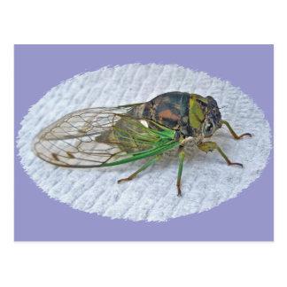 Jährliche Zikaden-koordiniereneinzelteile Postkarte