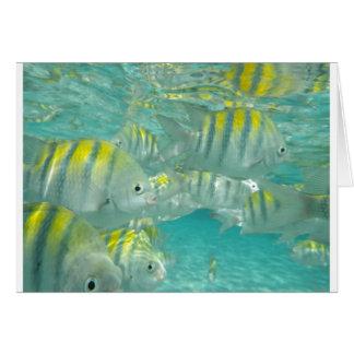 Jamaikanische Fisch-Karte Karte