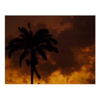Jamaikanische Palme Postkarte