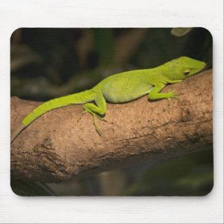 Jamaikanisches riesiges anole mousepad