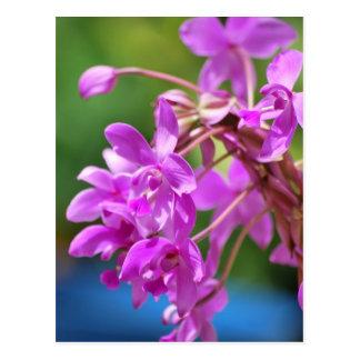 Januar-Blüte Postkarte