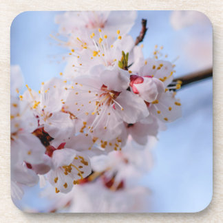 Japanische Aprikosen-Blüte Getränkeuntersetzer