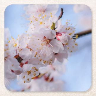 Japanische Aprikosen-Blüte Rechteckiger Pappuntersetzer