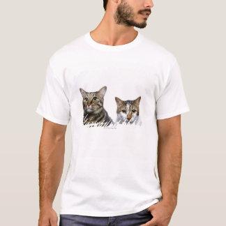 Japanische Katze und Manx Katze auf weißem T-Shirt