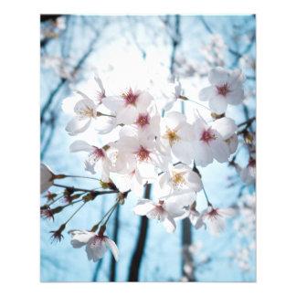 Japanische Kirschblüte Asiens Flyer