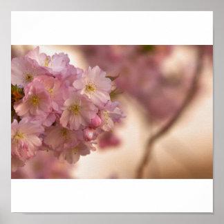 japanische Kirschblüte Poster