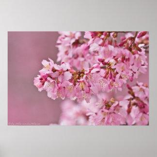 Japanische Kirschblüten heraus auf einem Poster