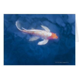 Japanische koi Fische im Teich, hohe Winkelsicht Karte