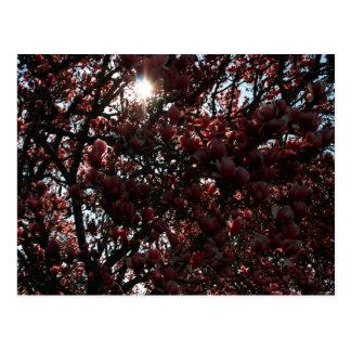 Japanische Magnolie Postkarte