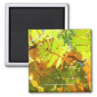 Japanische Pagoden-Baum-Herbst-Blätter - Magnet Quadratischer Magnet