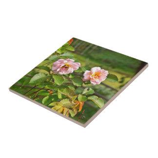 Japanische Rosen-Foto-Fliese Keramikfliese