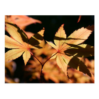 Japanischer Ahorn (1) - Herbst-Farben - Postkarte