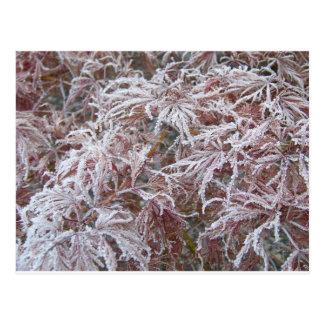 Japanischer Ahorn im Frost Postkarte