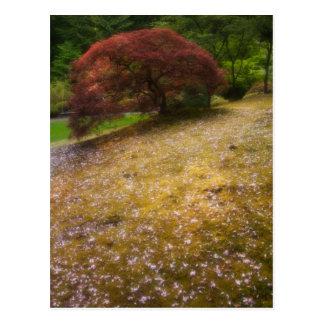 Japanischer Ahorn in einem japanischen Garten im Postkarte