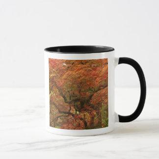 Japanischer Ahorn in Fallfarbe 4 Tasse