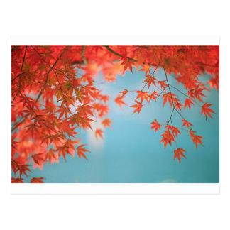 Japanischer Ahorn Postkarte