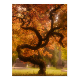 Japanischer Ahornbaum im Herbst Postkarte