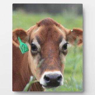 Jersey-Kuh Fotoplatte