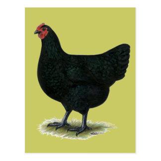 Jersey-Riese:  Schwarze Henne Postkarte
