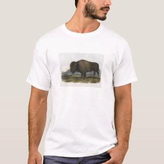 JJ Audubon - amerikanischer Bison T-Shirt