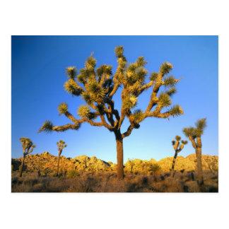 Joshua-Baum-Nationalpark, Kalifornien. USA Postkarte