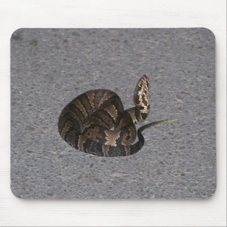 Jugendliche Cottonmouth-Schlange Mousepad