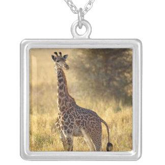 Jugendliche Giraffe, Giraffa camelopardalis 2 Versilberte Kette
