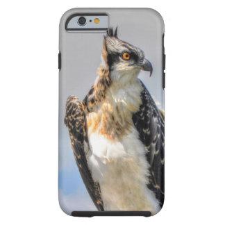 Jugendliche Osprey Fisch-Eagle Tier-Fotografie Tough iPhone 6 Hülle