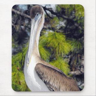 Jugendlicher Brown-Pelikan Mousepads