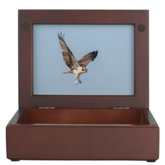 Jugendlicher Osprey im Flug Erinnerungsdose